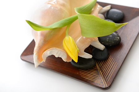 spa still life with tulip, stones and sea shell on wooden bowl over white background photo
