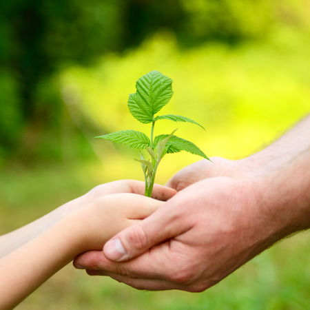 Father's and son's hands holding green growing plant over nature background. New life, spring and ecology concept Stockfoto