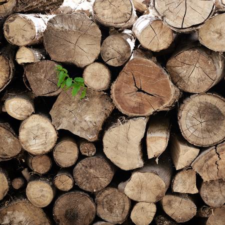 billet: fire wood, log, billet