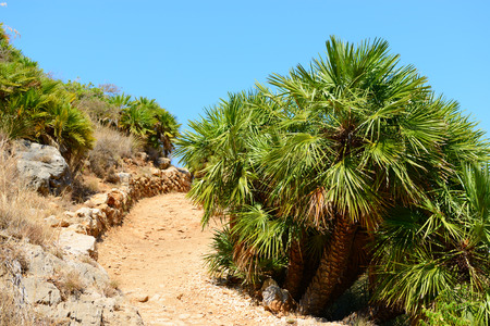 earth road: Landscape with mountain, tropical trees and earth road, Italy, Sicily, San Vito Lo Capo. Nature reserve Zingaro.