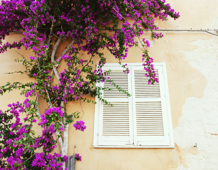 mediterranean house: Mediterranean house, Italy, Sicily. Detail with wall, window and flowers.