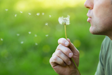 Man blowing dandelion over blured green grass, summer nature outdoor Stock Photo