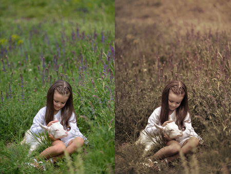Little girl plays and huhs goatling in country, spring or summer nature outdoor.