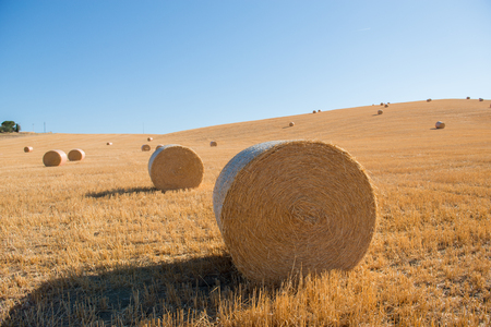 Harvestimg in Tuscany, Italy. Stacks of hay on summer field. Hay and straw bales in the end of summer Banco de Imagens