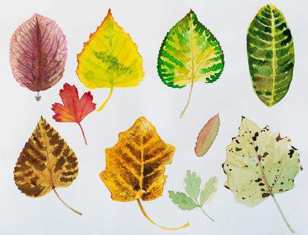 Watercolor autumn leaves. Fall foliage. Autumnal design. Seasonal decorative beautiful multi-colored drawing leaves. Original artwork.
