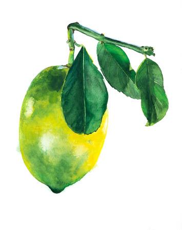 Yellow lemon with leaves. Fruit illustration. Bright print for fabric or wallpaper. Vibrant juicy ripe citrus fruit Stock Illustration - 122781840