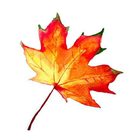 Hoja de otoño acuarela. Follaje de otoño. Diseño otoñal. Estacional decorativo hermoso dibujo multicolor deja. Obra de arte original.