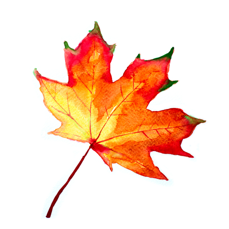 Watercolor autumn leaf. Fall foliage. Autumnal design. Seasonal decorative beautiful multi-colored drawing leaves. Original artwork. Stock Photo