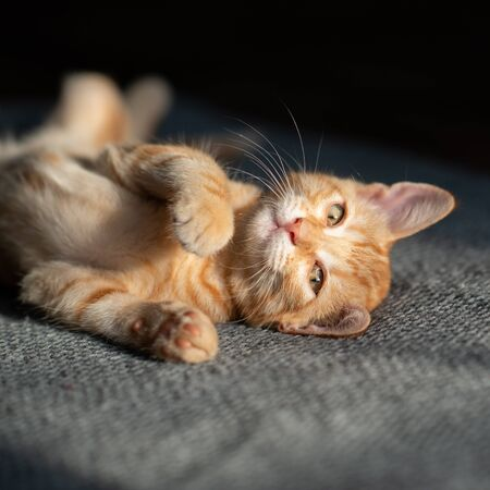 Little funny red kitten sleeps on sofa. Adorable little pet. Cute child animal. Cat rest at home. Self isolation. Stay at home