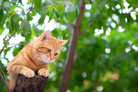 Beautiful young red tabby cat climbs trees, summer nature outdoor Foto de archivo