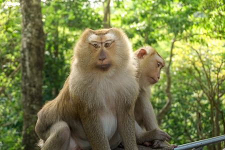 Monkey wildlife with blur background Stock Photo