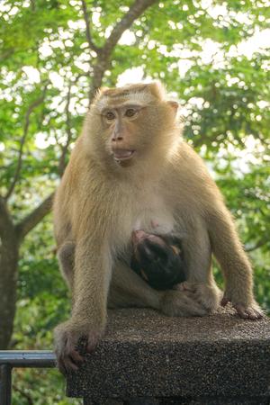 Monkey wildlife with blur background with new born