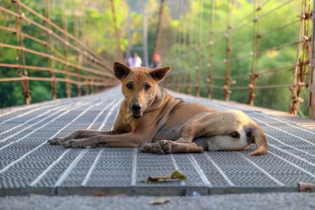 Brown Stray dog on the bridge