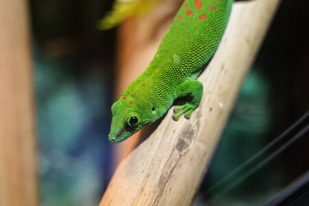 Colorful Green lizard on branch of tree