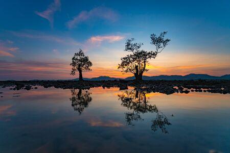 Beautiful Silhouette tree dusk evening blue sky mirroring water