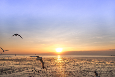 over the edge: Tranquil scene with seagull flying at sunset Stock Photo