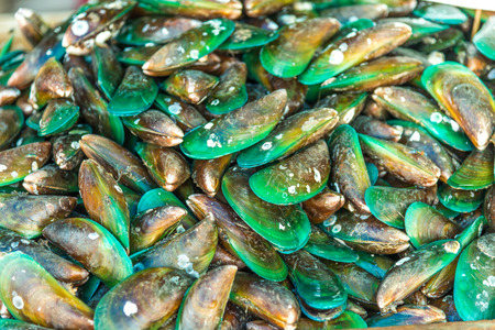 Green mussel (Mytilus trossulus) shells picked at beach, Stockfoto