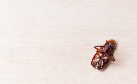 thorax: Cockroaches die on wooden boards