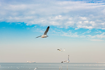 White seagull soaring in the blue sky.
