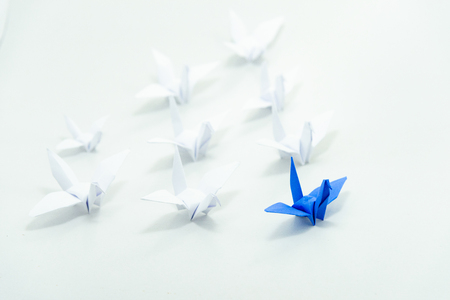 Close up red bird leading among white, Leadership concept. Stockfoto