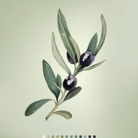 Vektor-Illustration von schwarzen Oliven auf weißem Hintergrund. Natürliche Olivenkosmetik. Design für Olivenöl. Vektor-Illustration