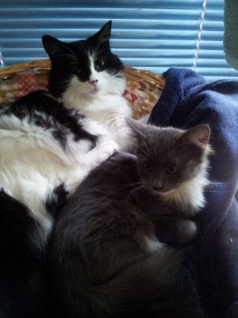 snuggling: Cats snuggling
