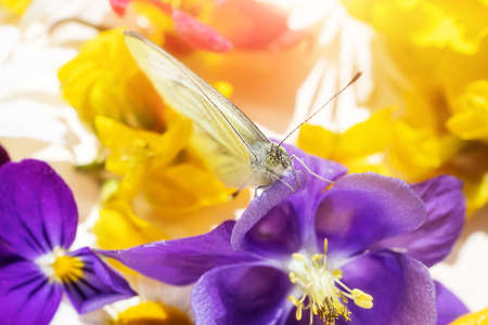 A butterfly sits on a purple flower, in the background are other flowers of a bouquet. Festive cute macro bright photo.