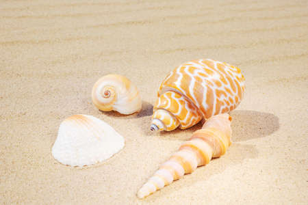 A variety of shells lie on the sand. The concept of summer vacation at sea. Sandy beach. Foto de archivo