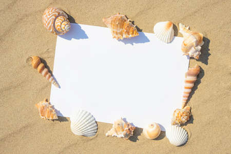 A variety of shells lie on the sand. White paper for text. The concept of summer vacation at sea. Sandy beach. Foto de archivo