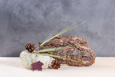 Autumn composition: ears of oats, tree bark, stone on a gray background. The concept of naturalness, environmental friendliness, wabi-sabi style. Standard-Bild