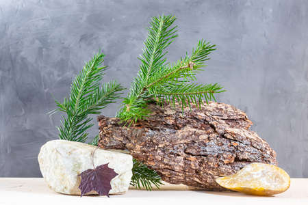 Autumn composition: spruce branch, tree bark, wooden podium, maple leaf, stone on a gray background. The concept of naturalness, environmental friendliness, wabi-sabi style.