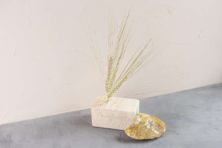 Autumn composition: ears of oats, tree bark, wood podium, stone on a light background. The concept of naturalness, environmental friendliness, wabi-sabi style. Standard-Bild
