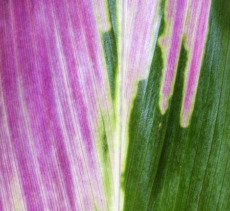 evident: Leaf colors range