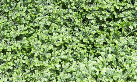 helechos: Helechos verdes frescas. Foto de archivo
