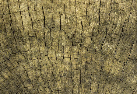 uplands: Texture Of Bark Wood