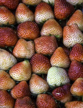strawberrys: Strawberrys image as a background.