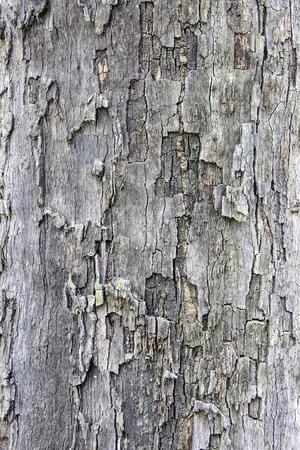 bark texture: bark texture