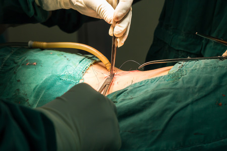 suture: suture wound