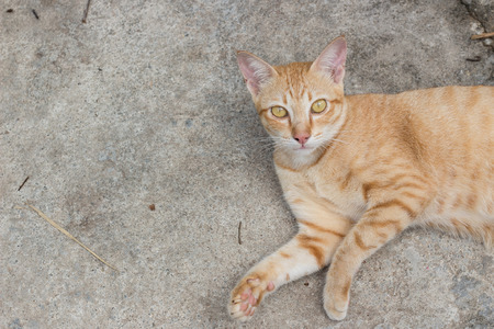 interested baby: yellow cat
