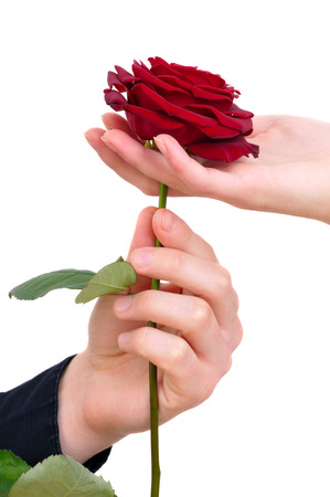 mans hand giving a rose to a woman who carefuly takes it photo