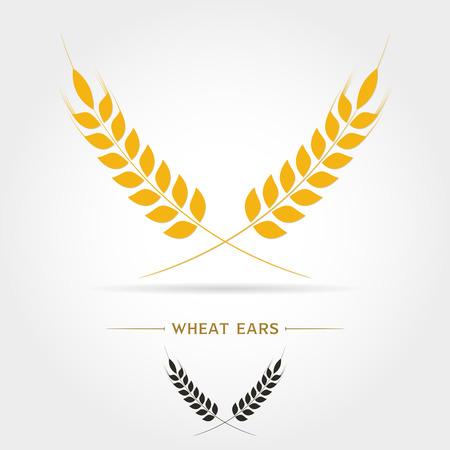 Spighe di grano, orzo o segale vettore visivo icone grafiche, ideali per il confezionamento di pane, etichette di birra etc.on sfondo bianco illustrazione vettoriale Vettoriali