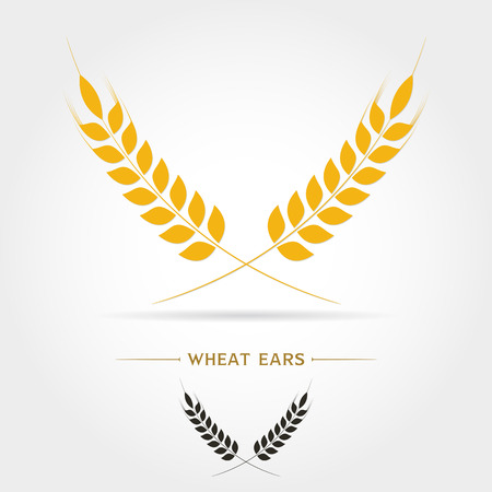 Ears of Wheat,Barley or Rye vector visual graphic icons, ideal for bread packaging, beer labels etc.on white background Vector illustration Illustration