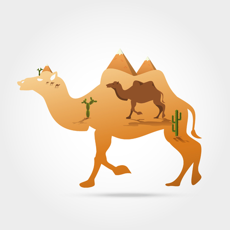 camel in desert: Silhouette of camel with panorama of Egyptian great pyramids with camel,sand dune,cacti in the desert, Vector illustration. Illustration