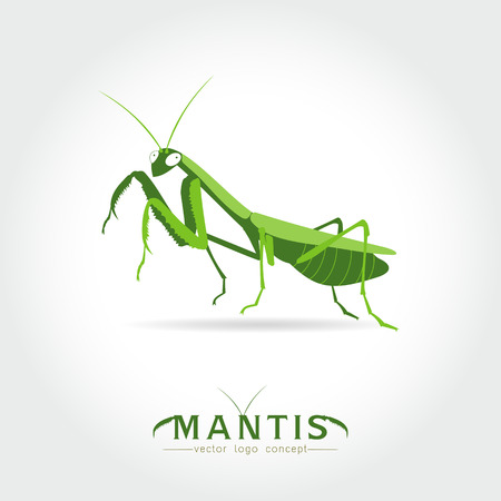 mantis: Beetle praying mantis isolated on a white background. Vector illustration. Illustration