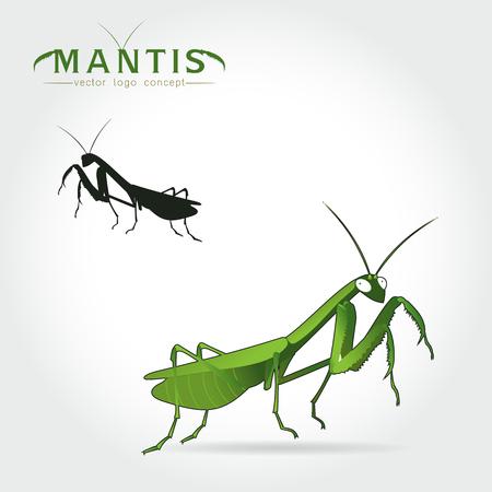 Beetle praying mantis isolated on a white background. Vector illustration. Illustration