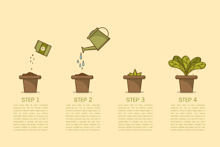 Growing plant stages. Seeds, watering can, sprout and grow plant. House plant in flower pot. Line style flat vector illustration of house plant with leaves in pot. Thin lines. Grow process.