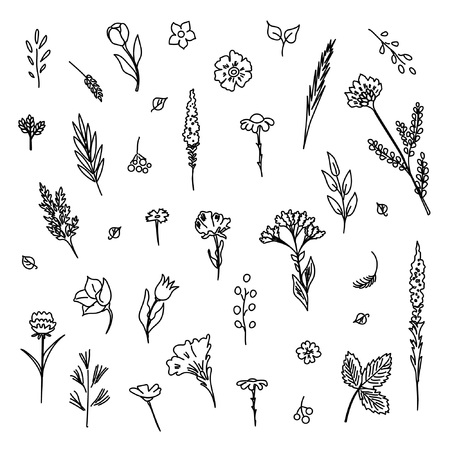 Collection of flowers and plants. Used for various types of design. Linear style. Vector illustration Иллюстрация
