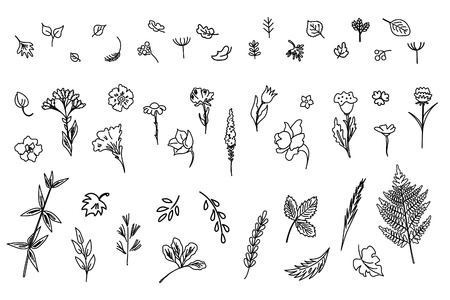 Big collection of flowers and plants. Used for various types of design. Linear style. Vector illustration