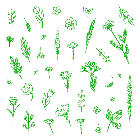 Collection of flowers and plants. Used for various types of design. Linear style. Vector illustration Ilustração