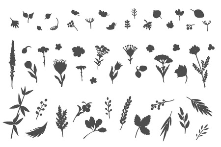 Big collection of flowers and plants. Used for various types of design. Vector illustration